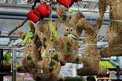 Meeting -  Arbeitsbesprechung (Sockenhummel) Tags: hasen bunnies osterhasen easterbunnies dekoration gartencenter fuji x30 fujifilm finepix fujix30 ostern easter frühling spring