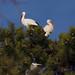 The peeping heron