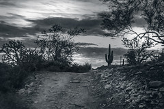 DSC_2510-Edit (lilnjn) Tags: arizona southwestunitedstates travel unitedstates whitetank