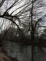 IMG_0587 (augiebenjamin) Tags: lakeviewparkway lakeshoredrive provo utah mountains provorivertrail trees spring winter spanishfork nebo bicentennialpark oremcity provocity utahvalley utahcounty oremarboretum
