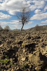 Single tree (BesimIbrahimii) Tags: country village nature landscape vertical kosovo mitrovice tree
