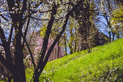 IMG_5198 (TuddMSK) Tags: nature portrait action landscape leaves spring cherry blossom tree outdoors canon eos 600d digital photography art colors