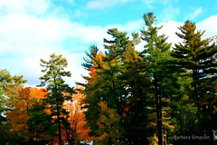 The Trees of the 1000 Islands (barbarasimpson_photography) Tags: 1000islands stlawrenceriver jonescreek autum weekend foliage bluesky sunset pretty environment ontario canada sumac dusk trees maples colour red orange white green purple lavender water majestic