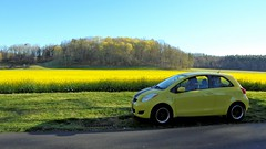 Canola Field (NC Mountain Man) Tags: canola toyota yaris 2010 canolagrain flower canolaflower car trees biltmoreestate sony dscw810 ncmountainman phixe grain crop wheels tires sky spring road field woods forest lowresolutionversion