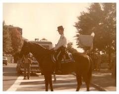November 1980 - Washington D.C.: Horse (mavra_chang) Tags: scanned grandpasphotograph animals horses domestichorses equines