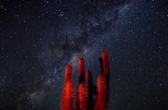 Quiscos en la Ruta Antakari (lpcortesfotografias) Tags: universo space espacio nightscape longexpo longexposure largaexposicion chile elqui stars cosmos outdoor travel astrophotography night estrellas