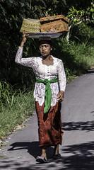 Walking (Vickyeastwood) Tags: bali darwincameraclub indonesia nikond7000 nikon d7000 d7k photographytour tour photography photographer nyepi purifcationceremony silenceday temple tanahlot tanahlottemple water buahantemple