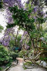 Spiry Tree (orkomedix) Tags: canon 6d garden italy color outdoor botanic tree 24105l
