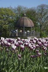 _DSC0872 (Riccardo Q.) Tags: parcosegurtàtulipani places parco altreparolechiave fiori tulipani segurtà