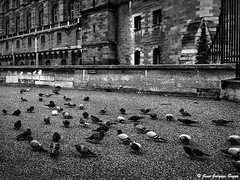 0534 - Saint Germain en Laye, 1974 (ikaune) Tags: nb bw noiretblanc blackandwhite ikaune argentic argentique monochrome saintgermainenlaye château pigeons