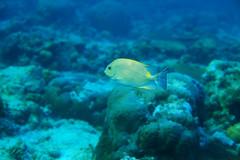 And the sun starts to go down... (Landersz) Tags: philippines filippine coron palawan club paradise snorkeling turtle shark clownfish nemo dugong landersz canon 5dmk3 nimar gopro hero5