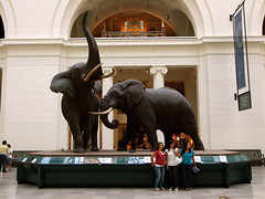 "African Elephant Diorama • <a style=""font-size:0.8em;"" href=""http://www.flickr.com/photos/34843984@N07/14919936363/"" target=""_blank"">View on Flickr</a>"