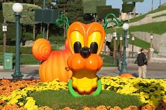 Halloween season 2014 - Disneyland Paris - 0641 (Snyers Bert) Tags: park parque paris france halloween season pumpkin euro disneyland familie pumpkins disney resort land pluto frankrijk vrienden parc parijs citrouilles disneylandparis dlp mensen citrouille plaatsen dlrp marnelavallee gebeurtenissen halloweenseason