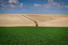 Landscape (Raycce) Tags: blue sky france green yellow clouds troyes landscape groen blauw sony wolken frankrijk lucht tamron geel 18200 landschap 2014 akker nexc3
