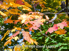Duke Farms-203284 (myobb (David Lopes)) Tags: fall nature newjersey nj duke olympus leafs tress hillsborough e510 dukefarm
