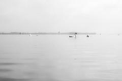 (worldshot photography) Tags: lake natur sw schwarzweiss bodensee schwan constance