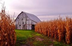 Abandoned Barn View (Neal3K) Tags: abandoned barn illinois farms edgarcounty