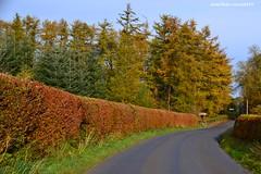 (Zak355) Tags: autumn trees season scotland colours rothesay isleofbute