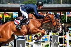 Ben Asselin riding Makaboy (yasminabelloargibay) Tags: horse caballo cheval mare chestnut cavalier cavallo cavalo pferd equestrian stallion equine csi hest paard showjumping hpica horserider gelding showjumper equestrianism equitacion hipismo
