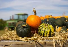 Harvest (Out of Ireland Photography ) Tags: autumn pumpkins harvest outofireland dublinhead dublinheadyahoocom headoftheharbour