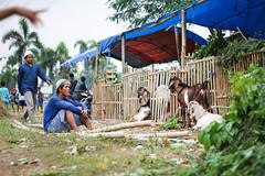 34 (Garry Andrew Lotulung) Tags: street portrait bw monochrome canon children indonesia cow blackwhite child muslim islam religion goat oldman human kambing adha humaninterest sapi tangerang idul eidmubarak iduladha canon7d