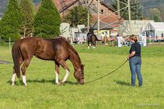 DSC06822_s (AndiP66) Tags: horse oktober macro sports sport schweiz switzerland mark sony luzern sp ii di if alpha tamron concours 77 pferd 70200 equestrian derby f28 ld horsejumping 70200mm wettbewerb 2014 springen kantonsolothurn inwil reithof springreiten cantonsolothurn stleodegar andreaspeters pferdespringen 77m2 a77ii ilca77m2 77ii slta77ii