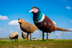 pheasants on the prairie (Sam Scholes) Tags: travel vacation sculpture bird birds artist pheasant roadtrip northdakota bismarck metalsculpture pheasants enchantedhighway garygreff pheasantsontheprairie
