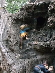 LONDON 1775 (RANCHO COCOA) Tags: wood uk england tree london garden elf trunk kensington kensingtongardens carvings sculpted elves theelfinoak