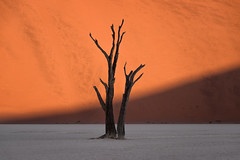Half Light (TheFella) Tags: africa travel trees light shadow sun tree slr nature digital photoshop landscape dead photography photo sand nikon african sandy fineart sigma clay photograph processing marsh dslr namibia sanddunes deadend d800 namibian sossusvlei southernafrica deadvlei postprocessing travelphotography claypan thefella conormacneill republicofnamibia republiknamibia republiekvannamibi thefellaphotography