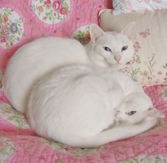 Snoopy and Daisy (twinkle_moon_bunny) Tags: cats white cute snoopy daisy