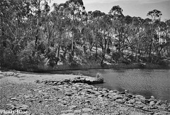 Lake (Plenty Blue) Tags: trees sky bw white black water monochrome up forest landscape grey bush stream close very pentax hill australia melbourne shades victoria xp2 400 area tones ilford forested 150sl