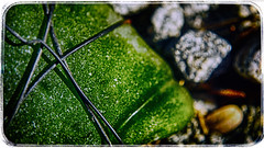 The Smooth Surface Of Glass (hbmike2000) Tags: sunlight macro green glass rock closeup wire nikon smooth scratches pebbles d200 scratched hdr hoya odc closeuplens hbmike2000