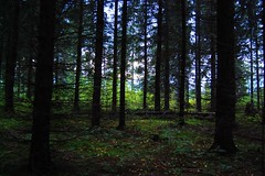 In forest (Miijau) Tags: wood sky green nature forest finland dark moss spruce