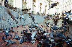 crackbirds (beau patrick coulon) Tags: sanfrancisco birds kodak pigeons 35mmfilm canonae1 powellstreet crackhead portra400