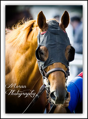 Ring Weekend (EASY GOER) Tags: horses horse ny sports racetrack race canon track competition racing 7d athletes sporting thoroughbred equine thoroughbreds belmontpark