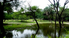 Forest: A High Contrast Lakes and Fields At Nehru Zoological Park, Hyderabad (Jangra Works) Tags: green water forest shadows trunk hyderabad nehru zoological greenary