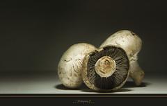 Mushrooms (aniribe) Tags: light stilllife color nature mushrooms nikon creative