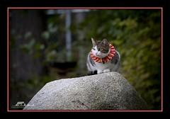GPS Trail Kitty (the_coprolite) Tags: canada cat nikon bc britishcolumbia sfu kitty sigma burnaby burnabymountain univercity d300 120400mm