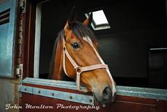 Showtime (John Moulton Photography) Tags: horse sam watson stable ballybolger