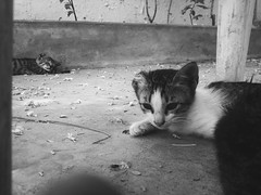 kitty brothers (I. AKHTAR) Tags: life travel urban bw cats cute monochrome fashion youth rural cat photography mono sweet grunge explorer kitty lifestyle kittens clean adventure explore indie filmschool cinematic disposable artschool artstudent filmstudent tumblr photographylife photographersontumblr originalphotographers iakhtar ikywork