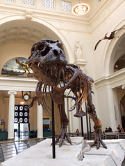 "Sue the Tyrannosaurus Rex front • <a style=""font-size:0.8em;"" href=""http://www.flickr.com/photos/34843984@N07/15516404196/"" target=""_blank"">View on Flickr</a>"