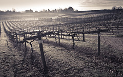 """At Three Choirs Vineyard, Gloucester • <a style=""""font-size:0.8em;"""" href=""""http://www.flickr.com/photos/54083256@N04/15522626585/"""" target=""""_blank"""">View on Flickr</a>"""