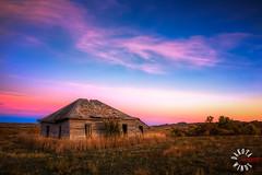 IMG_2674_3_2_1_0HDR.jpg (kendra kpk) Tags: autumn sunset fall birds southdakota canon october cattle pheasant wildlife winner carter 2014 trippcounty dakotawindsphotography dakotawindsphotocom kendraperrykoski