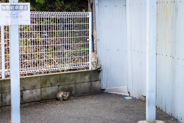 Today's Cat@2014-10-22