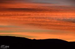 Sigo con los amaneceres... (E.M.Lpez) Tags: sky color clouds sunrise contraluz andaluca rojo aves pjaros amanecer migracin cielo nubes otoo octubre jan 2014 otoal bandada alcallareal