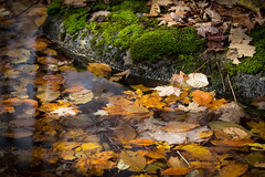 pond and rock (Juergen Trotz) Tags: water leaves rocks moos