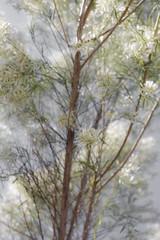 _MG_8453 (sir_mac_alot66) Tags: tree beautiful leaves cool fotografie fotografia   fotograph fotoraflk hermos