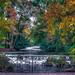 München, Englischer Garten, der Eisbach im Süden des Gartens