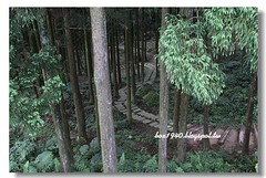 IMG_0321 (盒子(Box)) Tags: 三峽 茶園 槭樹 蛇莓 菫菜 薊 森林步道 鳥不踏 扛板歸 熊空農場 台灣農林 熊空休閒農場 熊空茶園 海拔七百公尺