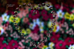 Happy Valentine's Day ! (mariola aga ~ OFF vacation) Tags: waterdrops heartshape heart reflection refraction flowers fabric bokeh macro art valentinesday saariysqualitypictures thegalaxy